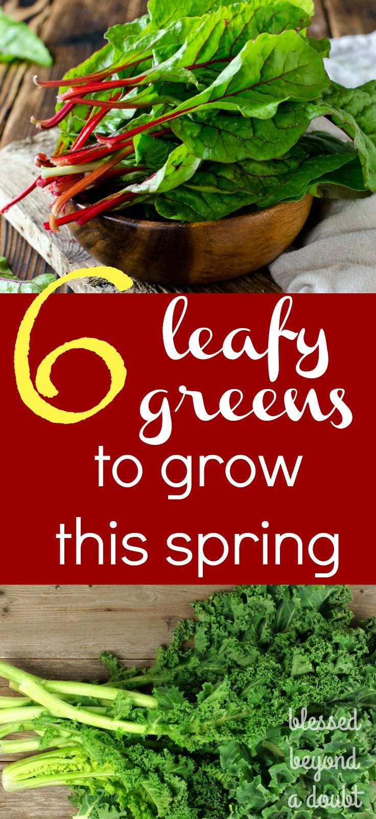 Here are 6 leafy greens you should grow this spring. I'm in love with #2. It's my new favorite.