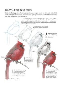 How To Draw a Bird | Audubon Magazine