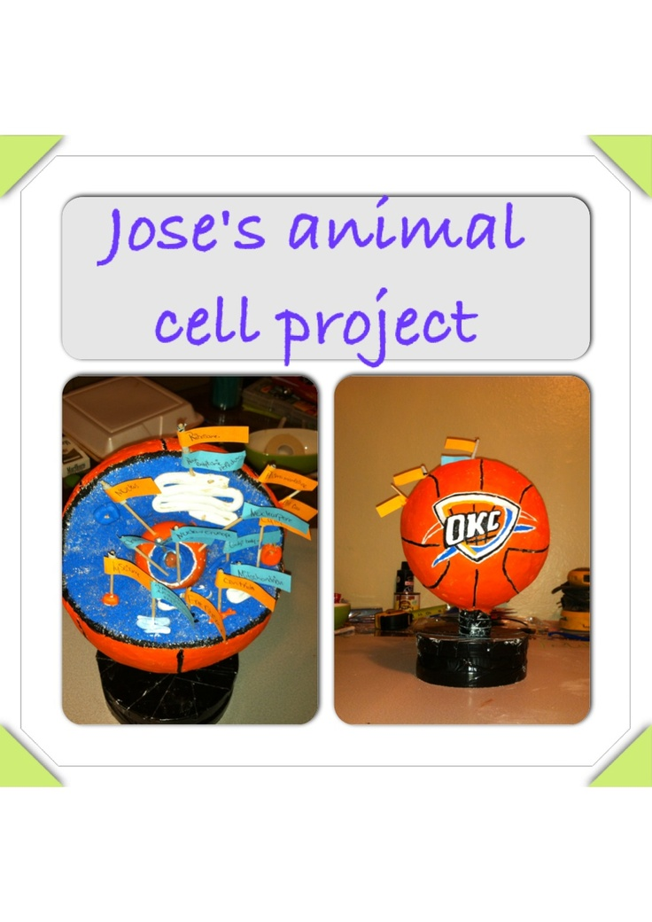 Animal cell project (6th grade science project)