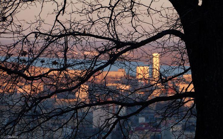 Сквозь ветви деревьев Фото Антон Стариков      #Саратов #СаратовLife