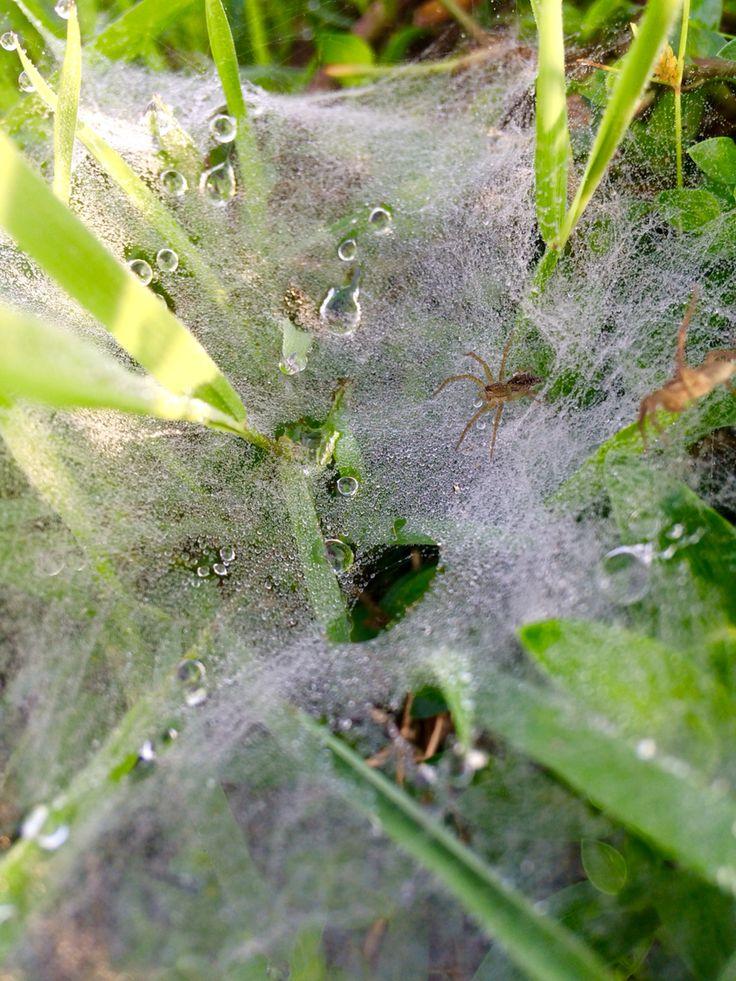 Embun daun serangga