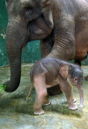 Elephant, Elephant, Elephant Baby: Bali Honeymoon, Babies, Baby Elephants, Animals Elephants, Wedding, Elephant Baby 3, 3 Elephants, Beautiful Creatures, Elephants 3