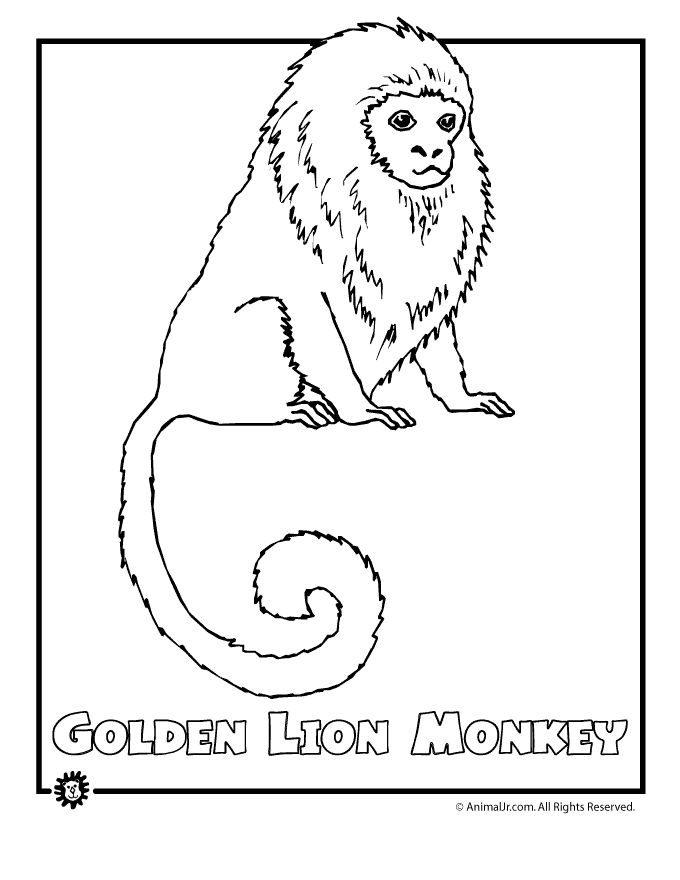 Colouring Pages Jungle Scene 111 Best Safari Vbs Images On Pinterest