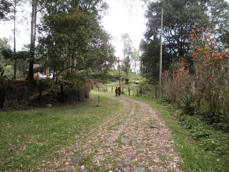 Camino empedrado en Pantanillo
