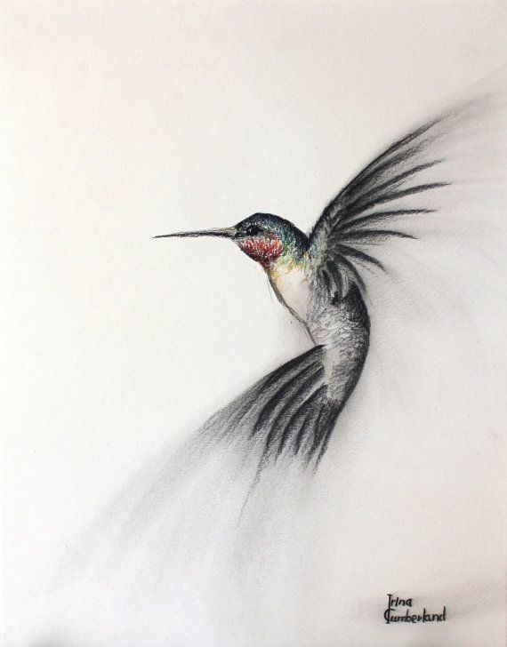 Hey, I found this really awesome Etsy listing at https://www.etsy.com/listing/74176496/original-bird-art-charcoal-drawing-of-a