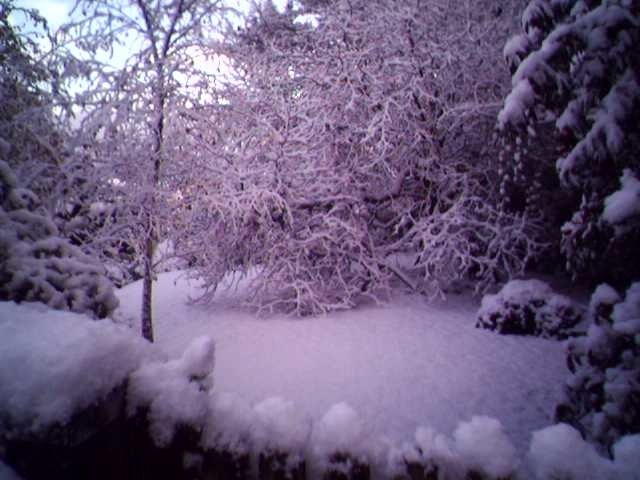Snow in Lyme
