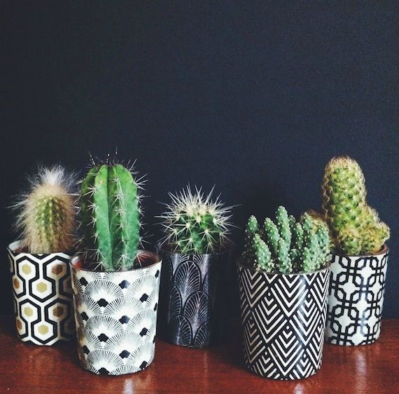 cacti - black and white pattern planters