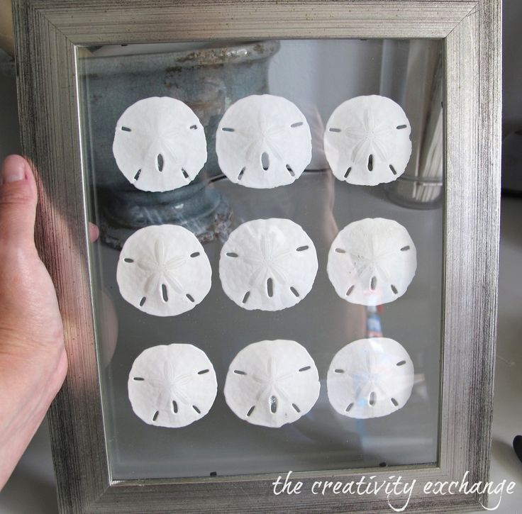 Tutorial for how to make double sided glass frames for displaying shell collections. Can do this with extra large or small frames {The Creativity Exchange}