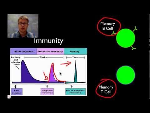 The Immune System - YouTube