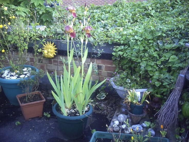 My roof top garden