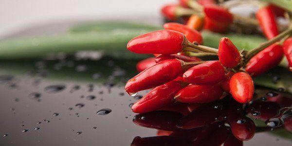 La capsaïcine coupe l'appétit — et augmente le métabolisme.