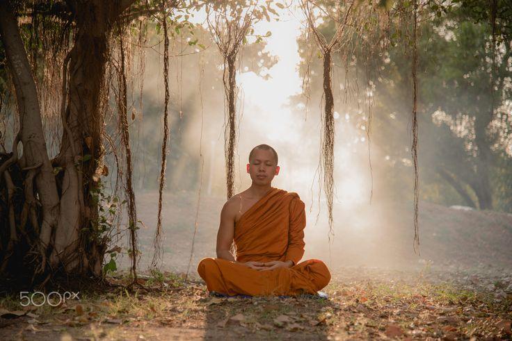 the monks meditate forest.   Monk meditation, Buddhist ...
