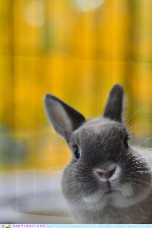 : Animal Baby, Baby Bunnies, Cute Pet, Easter Bunnies, Cute Bunnies, Baby Animal, Funny Faces, Dwarfs Rabbit, Chubby Cheeks