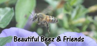Beautiful Beez
