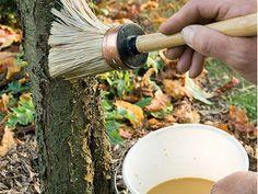 Les arbres et arbustes d'ornement demandent des traitements naturels d'hiver contre les maladies et parasites. Rustica vous donne de nombreux conseils de jar...