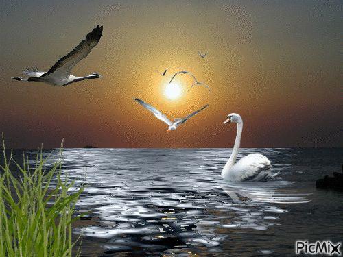 sunset  2  original backgrounds, painting,digital art by tonydanis