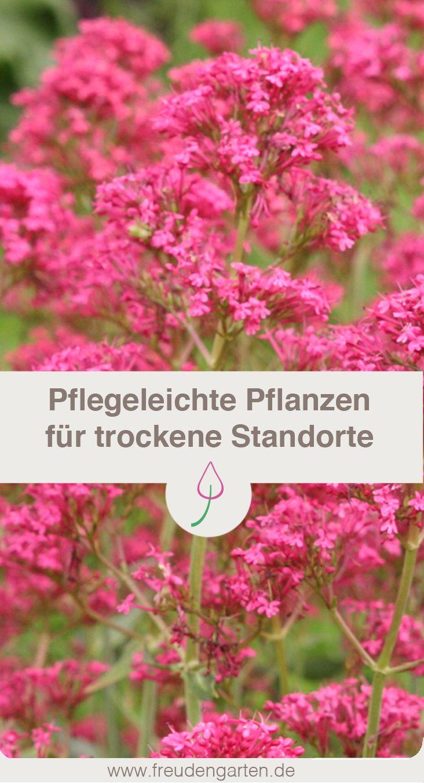 Pflanzen Für Trockene Und Sonnige Standorte Gartenpflanzen