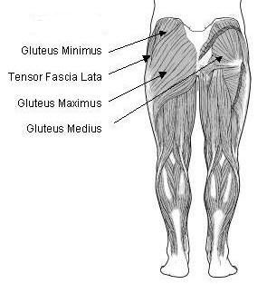 Tensor Fascia Lata aids in muscle movements