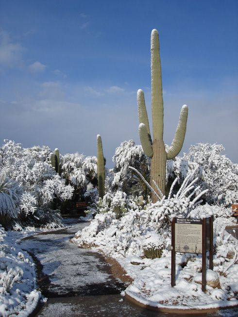 A rare snow storm in Sagauro NP, Arizona