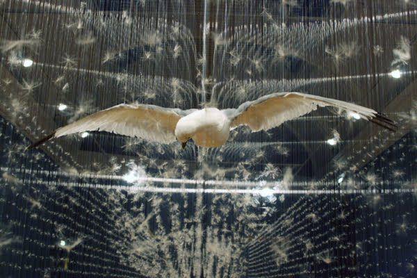LA TAXIDERMIE Hier dans les musées d'Histoire Naturelle ou les cabinets de curiosités, les animaux empaillés sont aujourd'hui dans les musées d'art moderne et sont utilisés dans l…