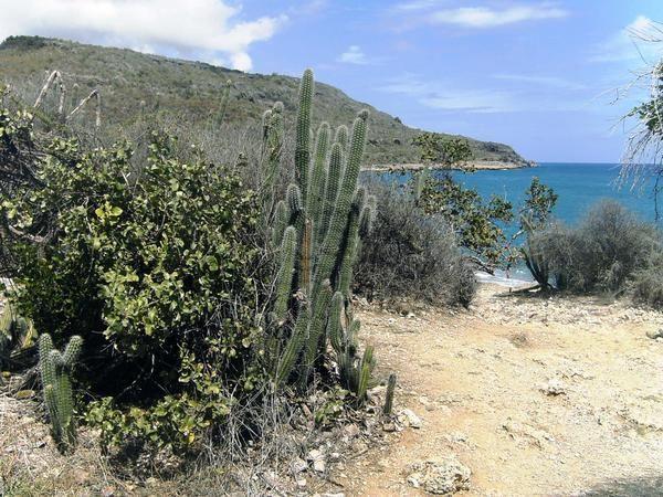 La Agencia de Medio Ambiente es el ministerio de ciencia technología y el medio ambiente de Cuba. Tiene muchos proyectos, programas y instituciones para conservar y proteger el medio ambiente.