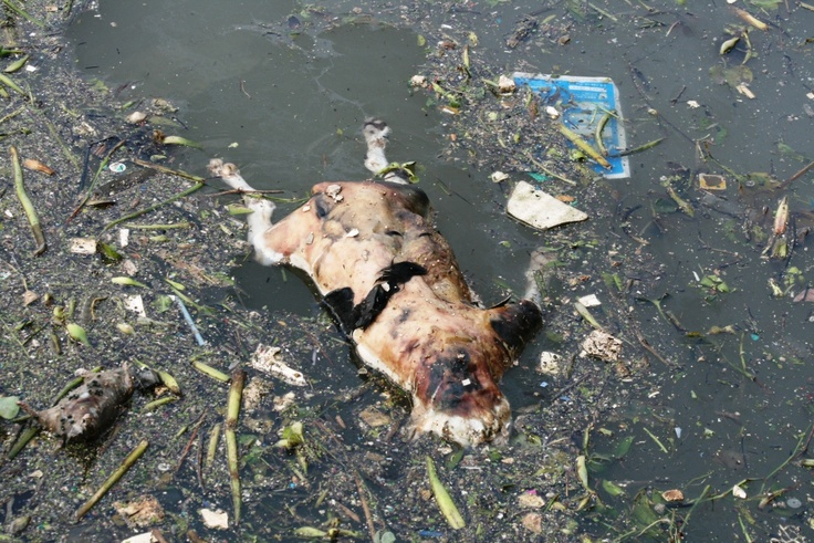 Dog Waste Water Pollution Uk