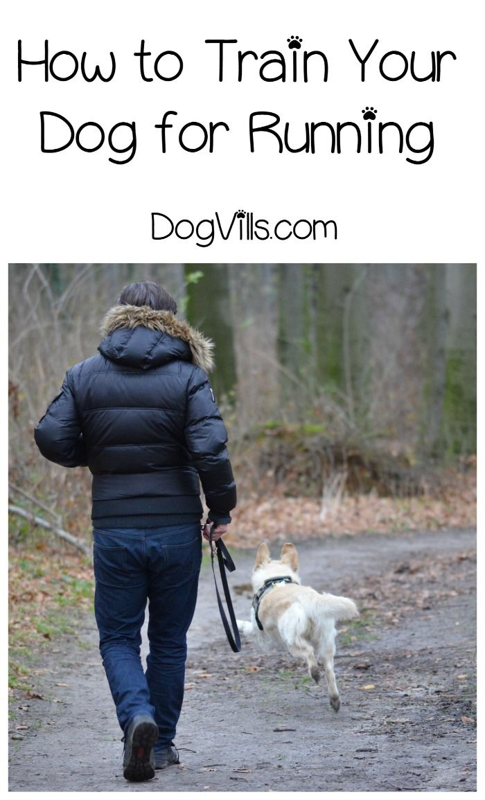 Want to go running with your dog? Check out our dog training tips to help Fido keep up!