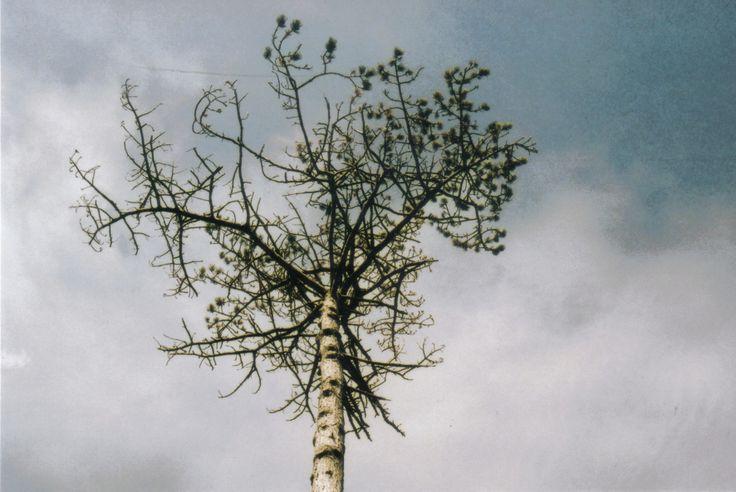 #tree #sky #halifax #pentax #film MADDY HOPE 2013