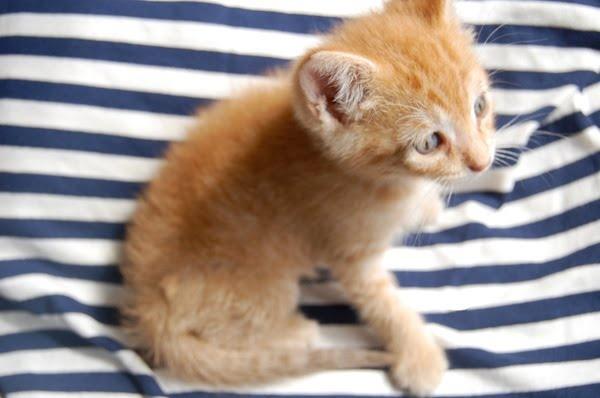 Newborn kittenCat Milo, Kitty Cat, Newborns Kittens, Catwoman, Precious Kittens, Jack Weigh, Baby Jack, Jack O'Connel, Animal