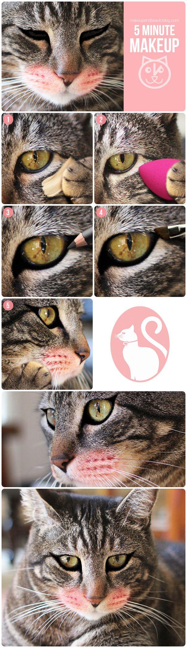 Sundays With Tabs the Cat, Makeup and Beauty Blog Mascot, Vol. 307 http://www.makeupandbeautyblog.com/just-for-fun/cat-eye-five-minute-makeup-tutorial/ #MakeupCafe