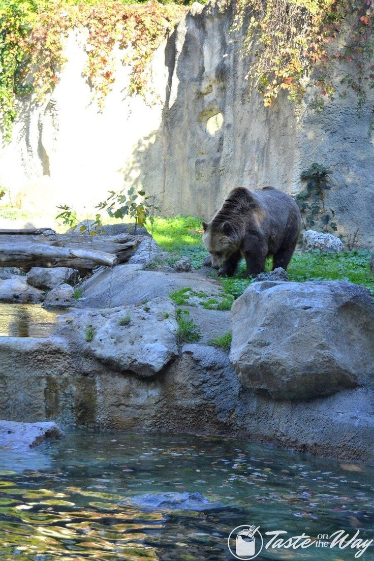 Visiting the Zoo is one of the top #thingstodo in #Rome, #Italy. Check out for more! #travel #photography