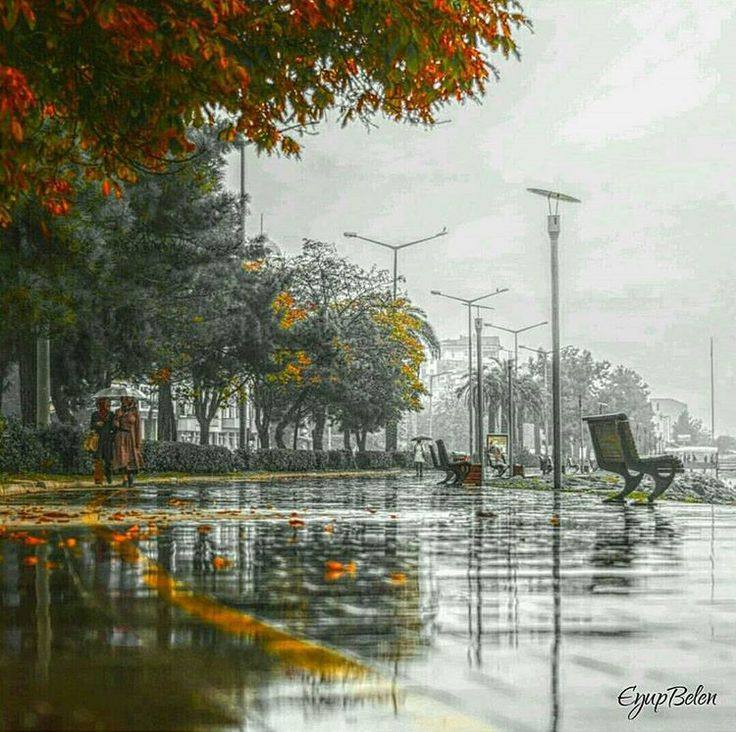 """""""Kasım'da memleket başkadır... #ordu ☔❤ ▶www.memleketordu.net◀ photo / fotoğraf  @eyupbelen ------------------------------------ #ordu #yagmur #karadeniz #blacksea #turkey #heygidikaradeniz #allshotsturkey #aniyakala #bir_dakika #comeseeturkey #fotografheryerde #gulumseaska #gununkaresi #hayatakarken #ig_mood #ig_energy #igturko #instagramturkey #picoftheday #photo_turkey #trtavaz #travel #travelgram #turkinstagram #turkeyhome #zamanidurdur #sonbahar #autumn #kasım"""