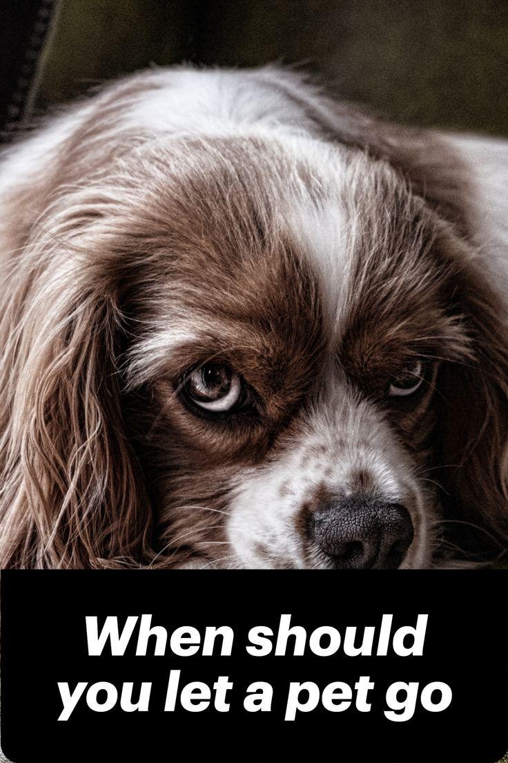 Pin on Canine Rehab stuff ) / Work