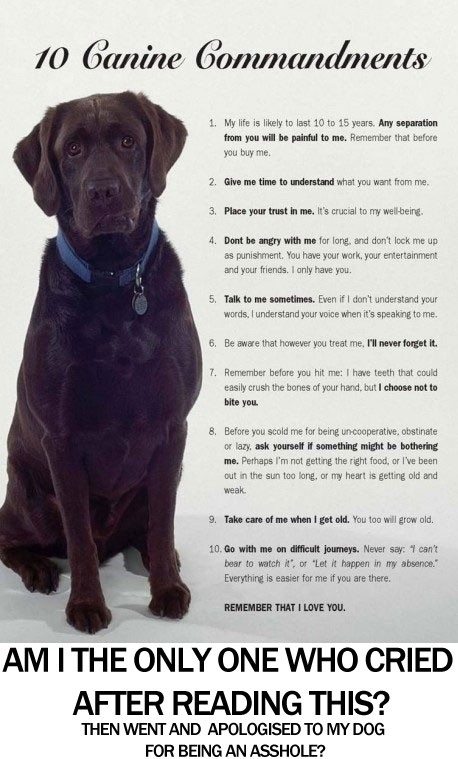 I love my puppy!Dog Owners, Best Friends, 10 Canine, My Heart, Caninecommand, So True, Canine Command, Dogs Command, Animal