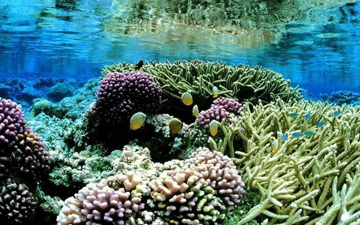 What does Coral Eat? Identify the Feeding of Corals