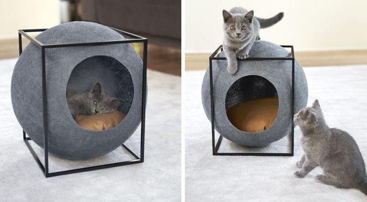 Cubic Cat Houses : cat cube