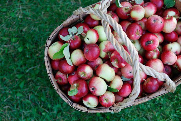 Omenasadon aikaan – Apples