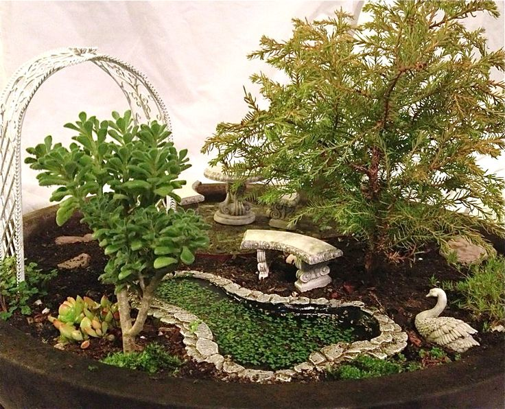 GORGEOUS little pond with live duckweed - love the edging stones! looks very nice with the jade next to it.