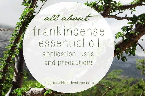Learn about the benefits and uses of frankincense essential oil for immune, cellular, joint, and emotional support (and more), via SustainableBabySteps.com