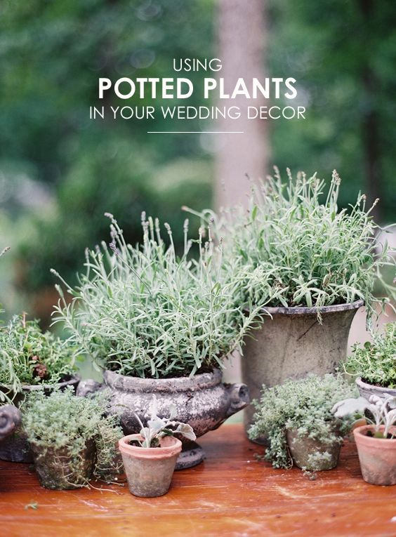 Best 25 potted plant centerpieces ideas on pinterest plant centerpieces herb centerpieces - Fabulous flower stand ideas to display your plants look more beautiful ...