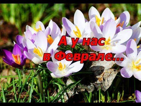 ✿✿✿ Деревья в цвету в Феврале/Trees in bloom in February