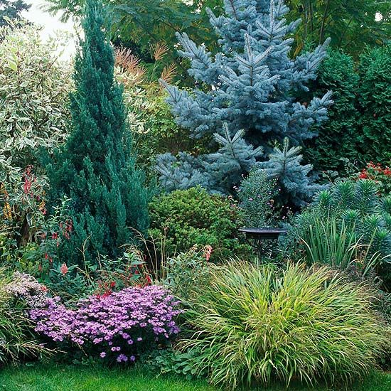 Choose tall varieties that have dark green foliage to accentuate bright colors. Or select cultivars with colorful foliage (such as the blue spruce shown here) to add interest to your plantings.  Test Garden Tip: Pay attention to plant shapes. Tall, upright evergreens create wonderful contrasts with mounded perennials and grasses, for example.