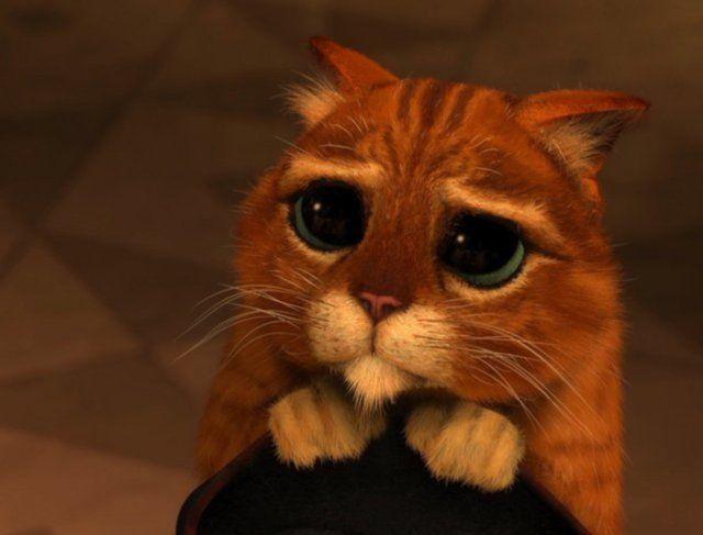 Gato Triste (repelente para gatos)