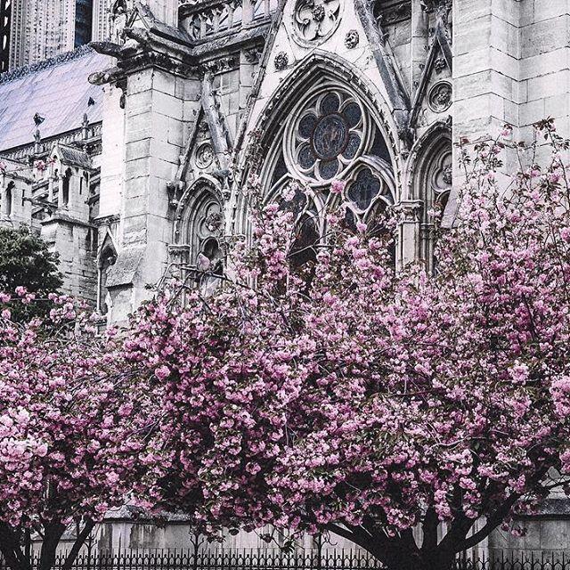 Складывается ощущение, что почти все, на кого я подписана, улетели в Париж снимать розовые деревья и теперь сутками мучают меня своими фотографиями💔😝🌸 А я что? Хуже что ли😈 У меня тоже есть😹😹 И да, давайте поговорим о том, кто куда хотел бы телепортироваться! Со мной всё ясно:) Мне хватит просто весны и хотя бы +15. А вам куда?