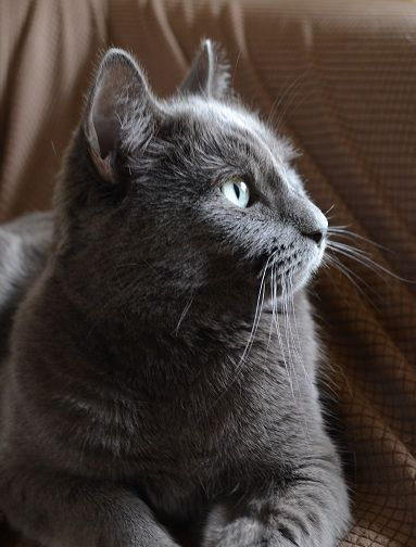 Smokey was my dad's cat. After Dad left, Sara found Smokey at a shelter and brought him to Dad's apartment so that Dad wouldn't be so alone. Dad and Smokey got along just fine, but then Heather came along, and Heather was allergic to cats—of course—so Smokey had to go. Mom was more of a dog person than a cat person, but she felt sorry for Smokey and took him in. ...from Smoke, Wings and Stone