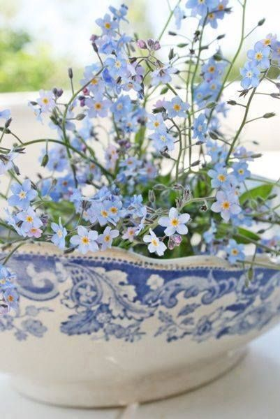 Bowl of Forget Me Nots