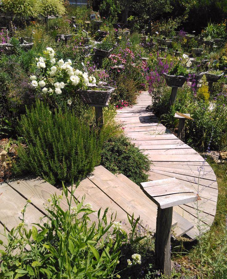 jardin de plantes vivaces dans en AUVERGNE  (VICHY) http://www.plantes-vivaces-hurlevents.com/