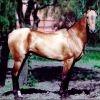 Cai de rasa: Akhal-Teke: Beautiful Breeds, Sorrel, Akhaltek Hors, Akhal Bowling, Almonds Shap Eye, 353 Hors, Hors Breeds, Country Life Hors