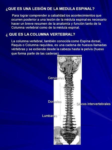 ¿QUE ES UNA LESIÓN DE LA MEDULA ESPINAL? Para lograr comprender a cabalidad ios acontecimientos que ocurren posterior a una lesión de la médula espinal.