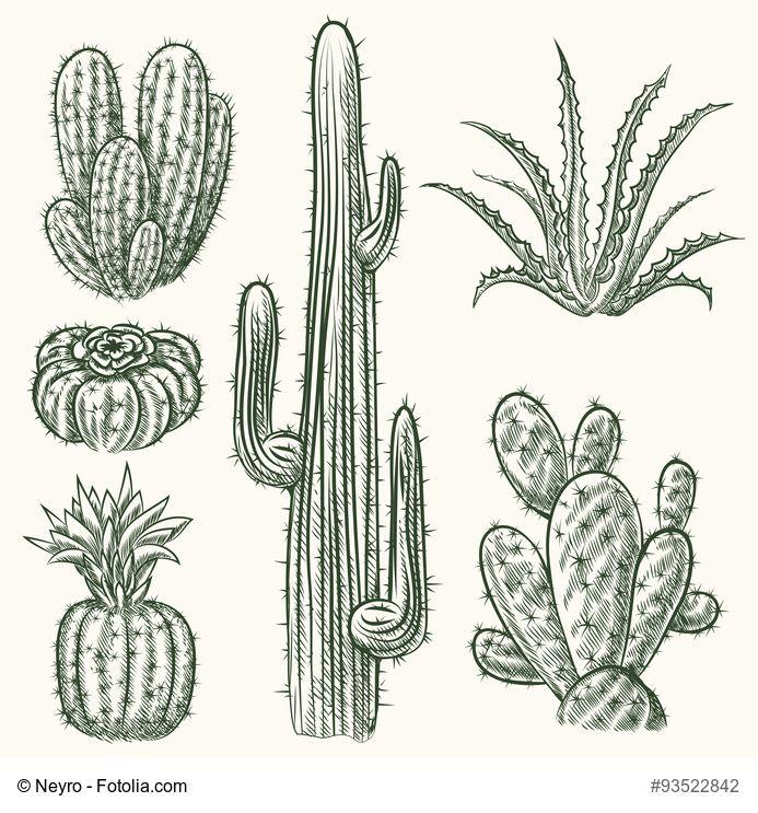 Hand drawn vector cactus set. Plant mexican nature, flora exotic illustration